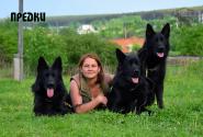 01_Puppies_Gandy2_Zabava2_PREDKI_BL