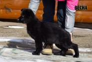 18_Puppies_Mike_Zebra_VESNA_BL