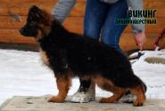 02_Puppies_Vaiko_Mira_VIKING_LH