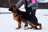 02_Puppies_Garry_Ullana_ORFEO_LH