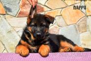 05_Puppies_Mike_Lamanta_LARRI