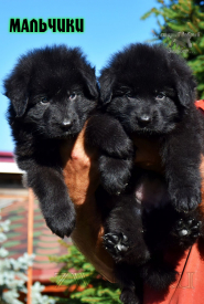 15_Puppies_Garry_Proza_BOYS_BL