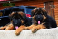 18_Puppies_Garry_Proza_GIRLS