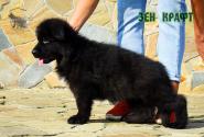 21_Puppies_Garry_Proza_ZEN-KRAFT_BL